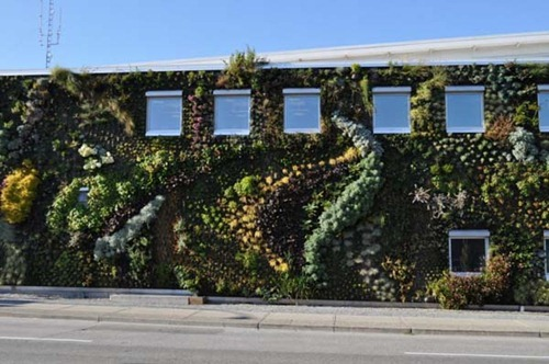 Semiahmoo-Library-Green-Wall-10