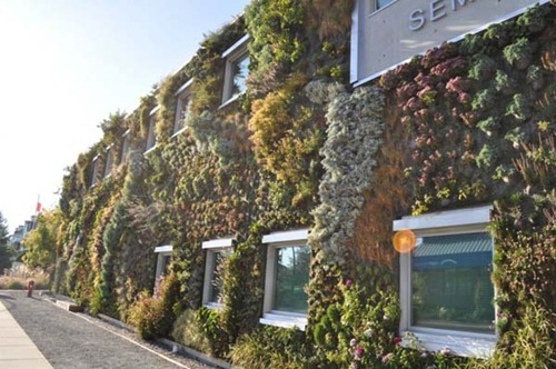 Semiahmoo-Library-Green-Wall-12