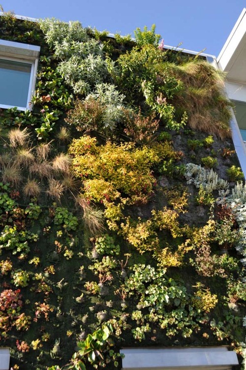 Semiahmoo-Library-Green-Wall-14