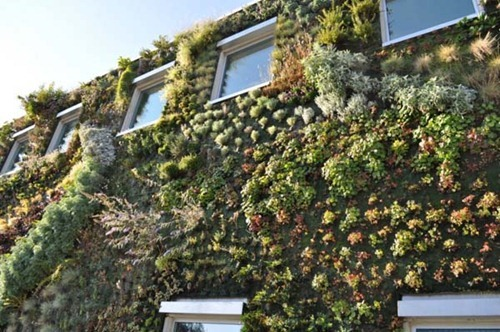 Semiahmoo-Library-Green-Wall-15