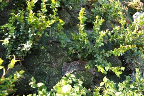Semiahmoo-Library-Green-Wall-17