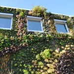 Semiahmoo-Library-Green-Wall-19