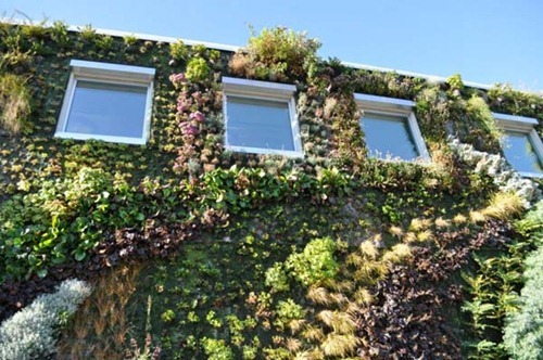 Semiahmoo-Library-Green-Wall