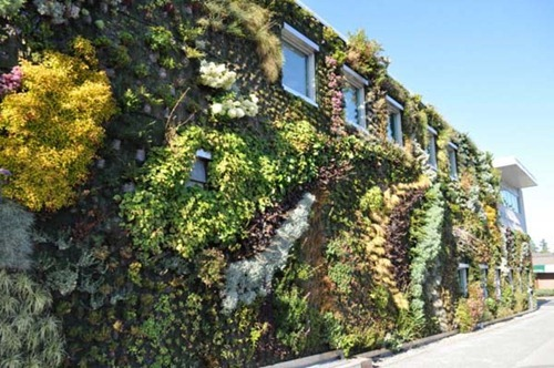 Semiahmoo-Library-Green-Wall-20