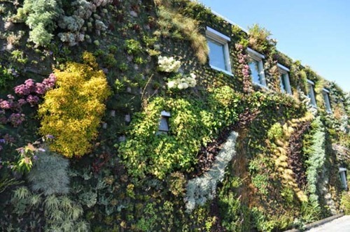 Semiahmoo-Library-Green-Wall-21