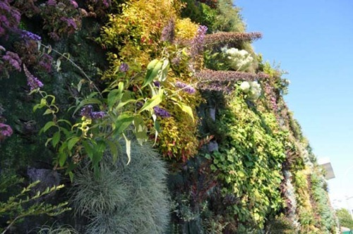 Semiahmoo-Library-Green-Wall-24