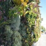 Semiahmoo-Library-Green-Wall-25