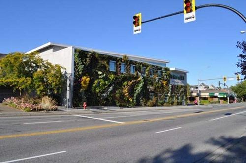 Semiahmoo-Library-Green-Wall-4