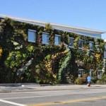 Semiahmoo-Library-Green-Wall-5