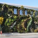 Semiahmoo-Library-Green-Wall-7