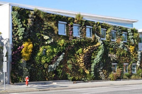 Semiahmoo-Library-Green-Wall-7