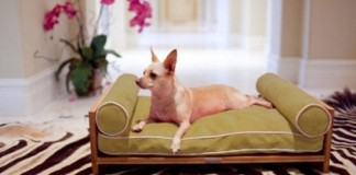 luxurious-furniture-for-spoilt-pets-1-554x369