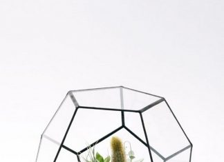 Terrarios para Casas Contemporáneas